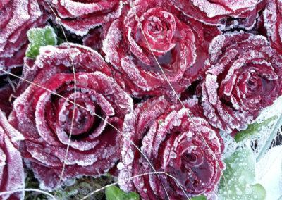 Blumen Dietz Neuenrade Trauerfloristik 11